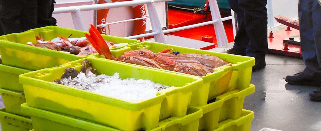 pescado-de-rula-de-artes-sanos-asturias-2