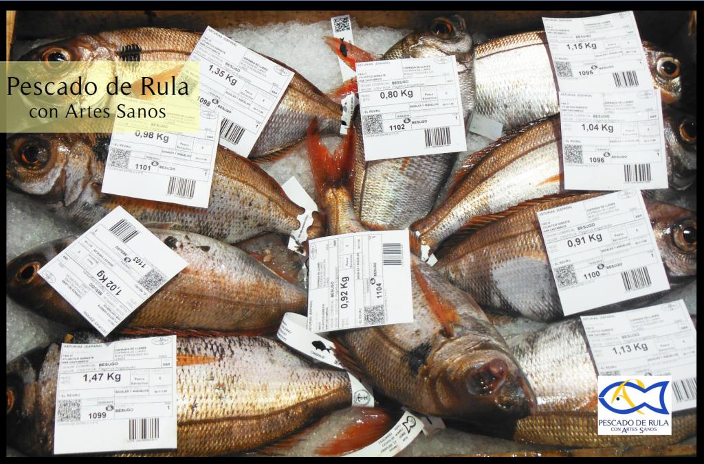 besugo pescado de rula con artes sanos