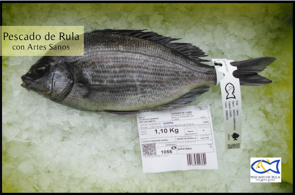 Choupa pescado de rula con artes sanos